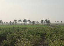 مزرعه للبيع النوباريه طريق اسكندريه الصحراوي