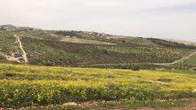 ارض مطله لعمل مزرعه بالنعيمه