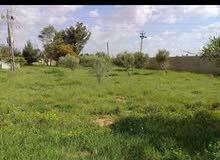 قطعة ارض هكتار وربع في الطلحية تبعد عن بوابة مصنع الاسمنت 4 كيلو مقابل محطة وقود العلواني على اليمين