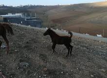 مهره عمر اربع أشهر