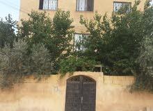 شقة للايجار مدخل منفصل - عين الباشا