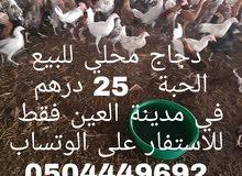 دجاج محلي للبيع في العين فقط للاستفسار على الوتساب 0504449692