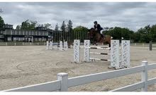 Top sport horses