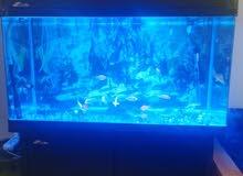 حوض سمك طول متر  عرض 43 سم مع الكبت