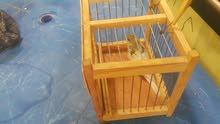 ملطش طيور للبيع