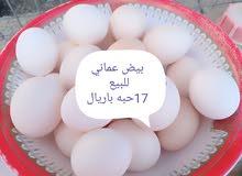 بيض عماني للبيع
