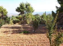 مزرعه مميزه 6 دونمات بالقرب من فندق غصن الزيتون / جرش