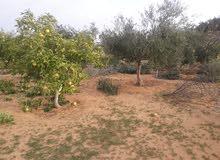 مشتل مبدع الحدائق التنسيق الحدائق والمسطحات الخظراء ونباتات الزينة والأشجار