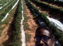 مهندس زراعي سوداني
