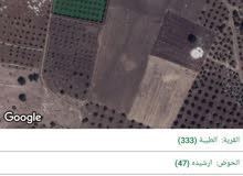 ارض زراعية مشجرة زيتون في أجمل سهول شمال الأردن