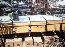 انشاء مناحل وبيع خلايا النحل بالكويت وفرز العسل