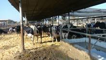 مزرعة نموذجية 1242 فدان للبيع  على طريق مصر اسكندريه الصحراوي