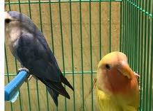 متجر الطيور