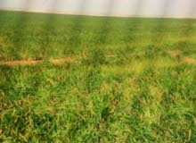 ارض زراعية 100 دونم