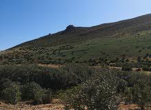 أرض فلاحية للبيع مساحتها 10 هكتار مطلة على بحيرة