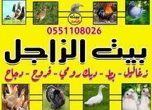 بيت الزاجل لجميع الطيور