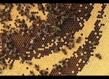 للبيع اندر انواع العسل التركية