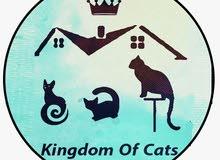 قطط شيرازية وهيمالايا وراغدول للبيع بمدينة جدة