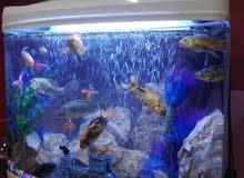 حوض سمك اجنبي للبيع