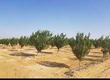 للبيع أراضي زراعية ملك مسجل