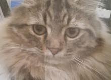 قطة ضائعة/ lost cat