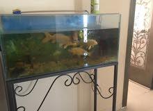 حوض اسماك كبير aquarium