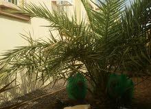 4 Bedrooms rooms  Villa for sale in Buraimi city Al Buraimi