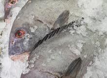 السمك المسكوف والسمك البحري من مطعم زيونه