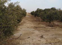 مزرعه 28 فدان بمنطقة  الأعمال بريف الفيوم مساحة