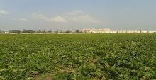 للبيع أرض زراعية ممتازة جنوب بورسعيد 4 سهم