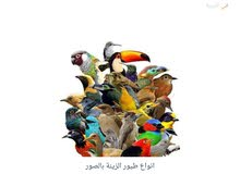 اتبنى جميع الطيور والببغاوات بالمهديه وضاحيه لبن