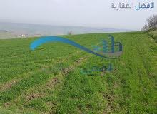 ارض زراعي 142 دونم عالية و مطلة للبيع في قرية الرمان
