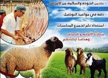 اغنام عربي للبيع مع التوصيل