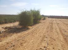 أرض ملك مسجل للبيع 60 فدان