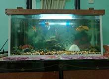 حوض سمك للبيع جميل وجديد