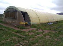 مطلوب بيوت زراعية ( محمية) مستعملة لتربية الدواجن