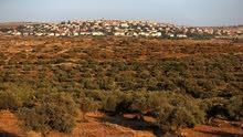 اراضي فلسطينية للبيع