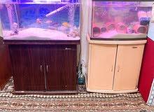حوضين سمك مع اغراضهم مع السمك