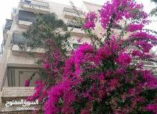 Al Zarqa Al Jadeedeh apartment for sale with 3 Bedrooms rooms