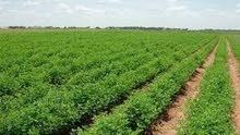 مزرعه 2 فدان بطريق الاسكندريه الصحراوى