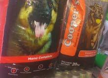 افضل طعام كلاب بل عالم برتغالي صنع جودا عالي