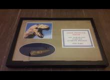 Rare dinosaur tooth from USA