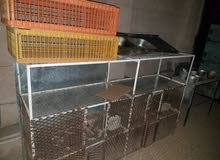 ادوات محل مسلخ دجاج كامله للبيع