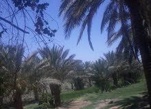 بستان للبيع كربلاء/الزبيلية قرب الشارع الرابط