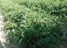 ارض مميزة للبيع بوادى النطرون