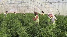 عمال مزارع
