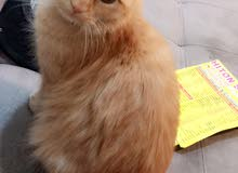 قطه لعوبه وحبوبه متدربه على لتربوكس