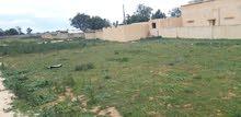مزرعة في أبو شماطة جنوب الزاوية
