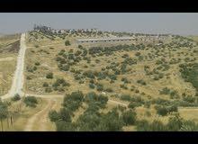 ارض للبيع في بلعما مساحت ارض 53دنم فيها بيت فيها 600شجره زيتون