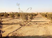 مزرعه نموزجيه بطريق اسيوط الغربي